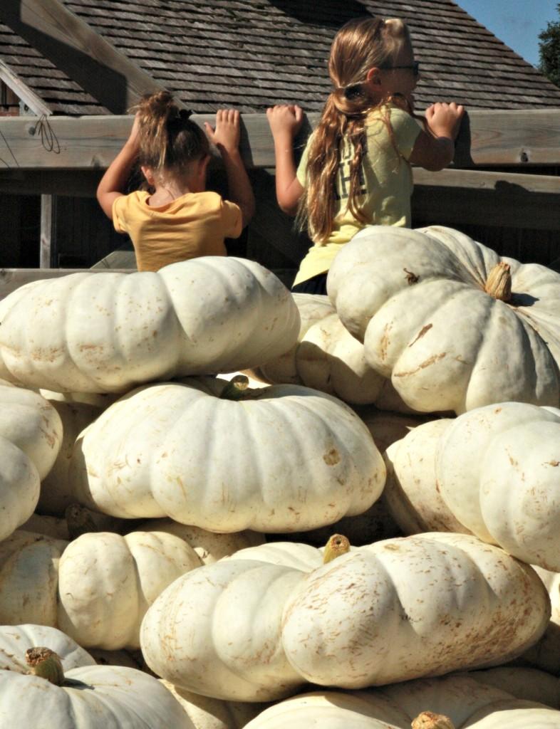 Girls and pumpkins