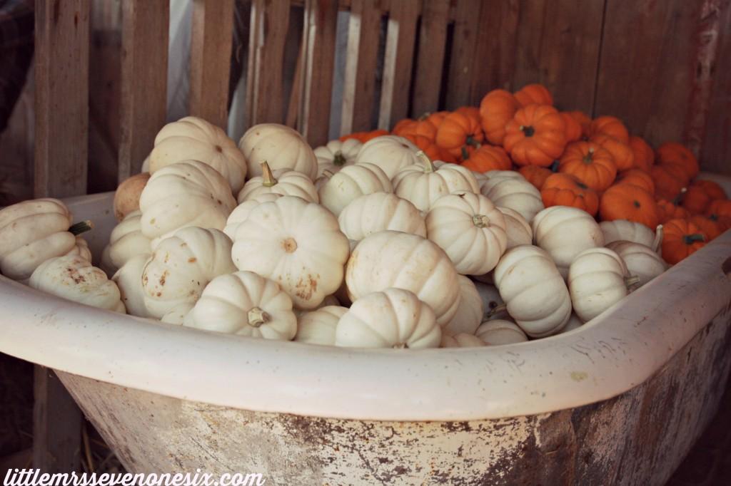 Pumpkin bathtub