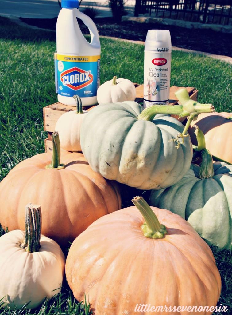 Pumpkin saving solution